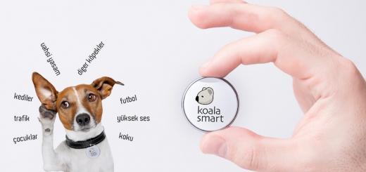 Koala akıllı tasma